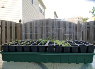 Planting seeds indoors, inside of seed starting trays, is a great way to help give you and your plants a head start on the upcoming outdoor growing season. Photo: Samuel Wilson
