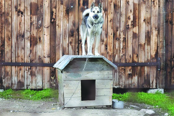 The Dutchess County Legislature adopted a county-wide animal abuse registry and a local law tightly restricting tethering of animals particularly in adverse conditions.