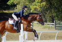 The State University of New York at New Paltz equestrian team earned the programs first victory in National Collegiate Equestrian Association (NCEA) action Friday after defeating hosting Lynchburg, 6-1.