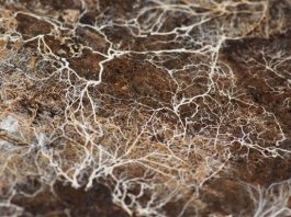 Underground mycelium networks can absorb and break down a wide range of natural and man-made compounds, and that's why we're using them to clean up contaminated sites naturally. Photo: Kirill Ignatyev, FlickrCC