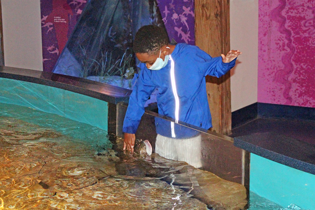 """Guests can literally get a feel for cow-nose rays and other creatures in the """"Shark & Ray Touch Pool"""" of The Maritime Aquarium at Norwalk, just an hour by car or train from Manhattan. The Aquarium is open with special COVID-19 precautions including admission by timed-ticket advance purchase only and that all guests over age 2 wear masks."""