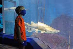 Close encounters with 9-foot sand tiger sharks await guests in The Maritime Aquarium at Norwalk, just an hour by car or train from Manhattan.
