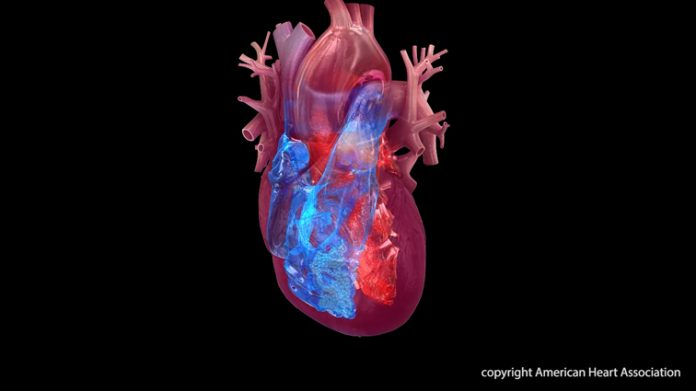 4 chambers of the heart: right atrium, right ventricle, left atrium, left ventricle.