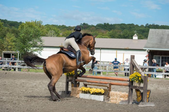 SUNY New Paltz equestrian team faced Sacred Heart University on the campus of Delaware State Saturday and lost to the Pioneers. Photo: Brooke Vissicchio